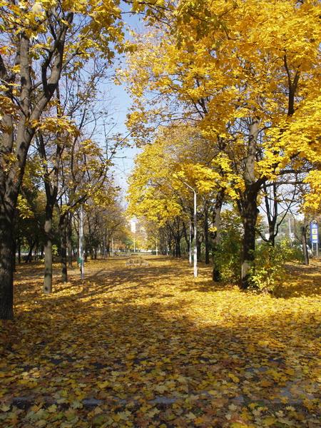 Как сообщает сайт Харьковского горсовета, в воскресенье, 23 сентября, в парке культуры и отдыха имени Горького...